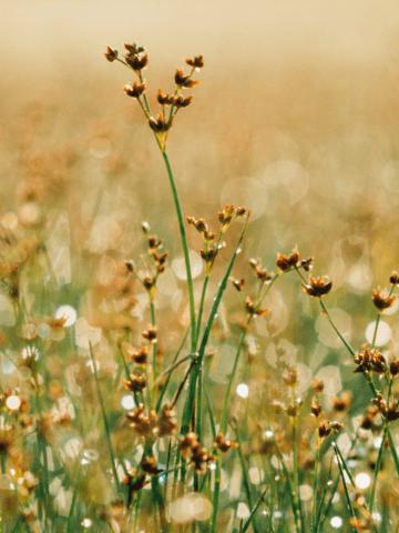 earth-herbs