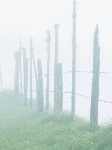 grass-fence