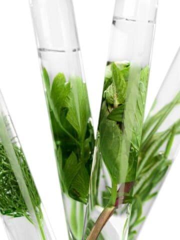 green herbs inside test tubes