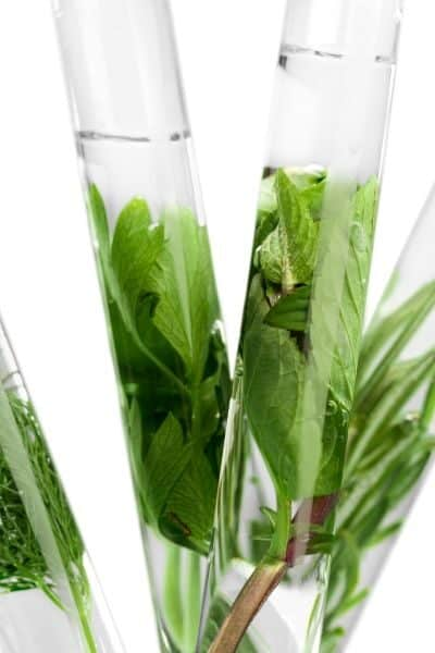green herbs inside test tubes