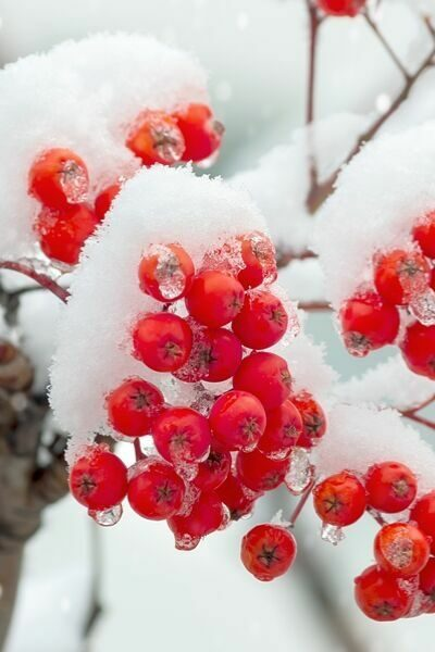 snow on branches representing eco friendly gift ideas