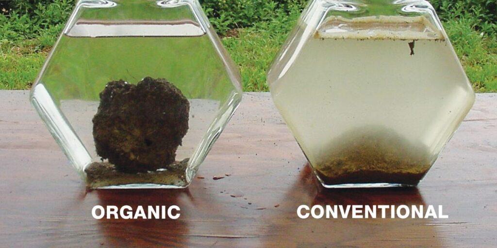 Organic versus conventional soil