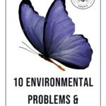 "Purple butterfly on white background with text that reads ""10 Environmental problems and solutions"""