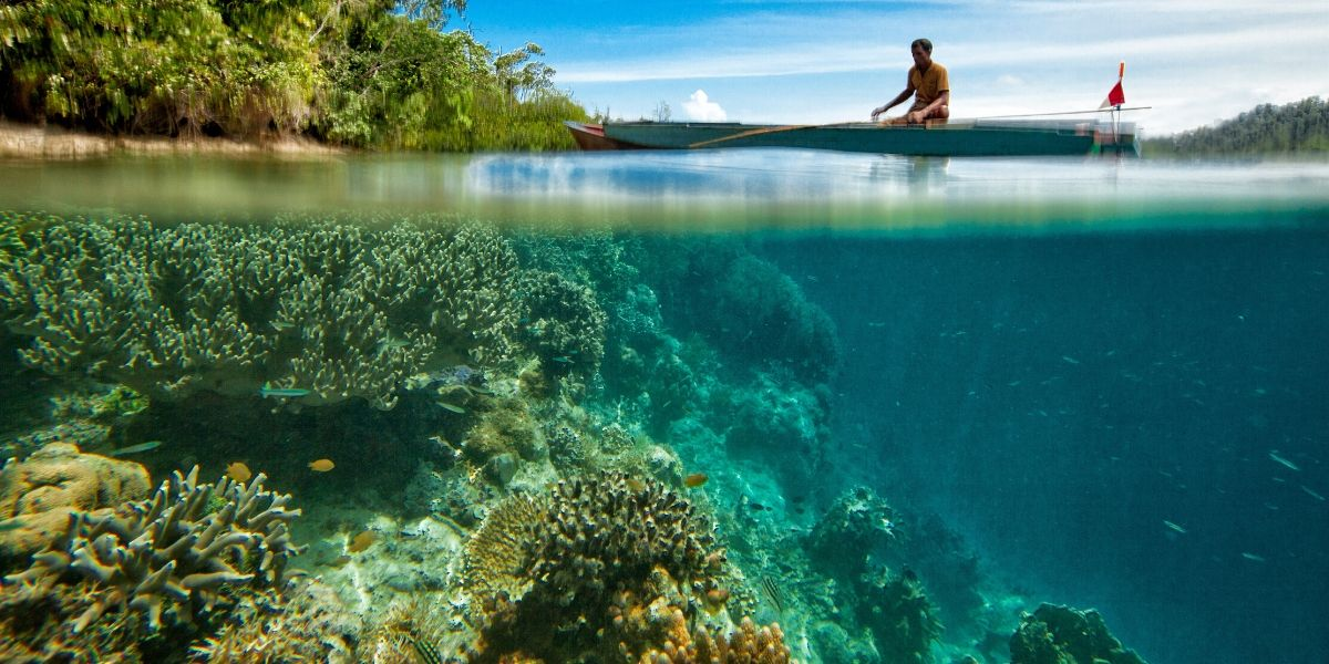 Man on boat and coral below on the ocean floor.